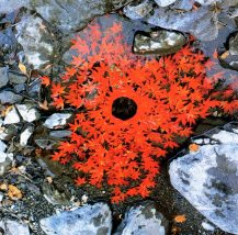 Andy Goldsworthy2